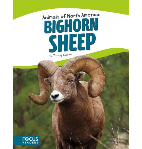 Bighorn Sheep (Hardcover) (Tammy Gagne) - image 1 of 1