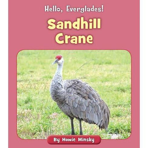 Sandhill Crane - (Hello, Everglades!) by  Howie Minsky (Paperback) - image 1 of 1