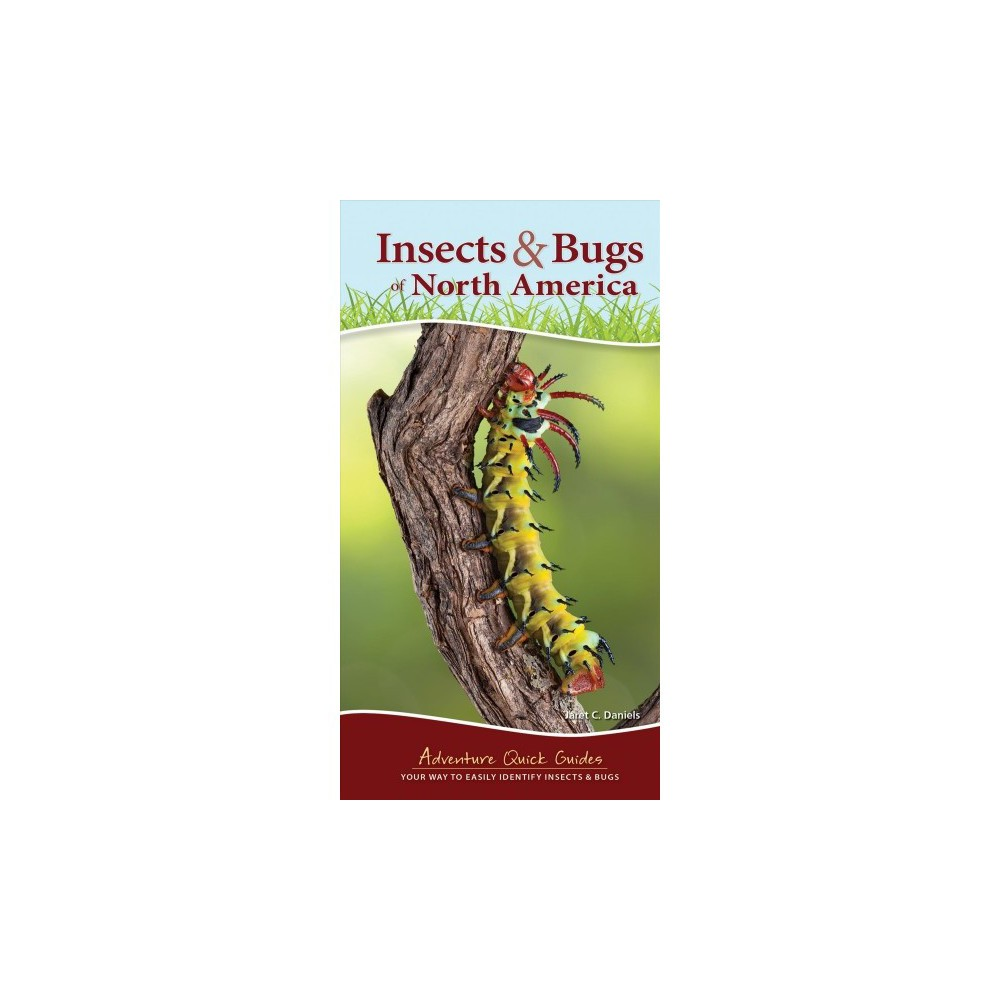 Insects & Bugs of North America - (Adventure Quick Guides) by Jaret C. Daniels (Paperback)