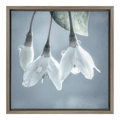 "16"" x 16"" USA, Washington, Silverdale. Japanese snowbell tree blossoms. Framed Canvas Wall Art - Amanti Art"