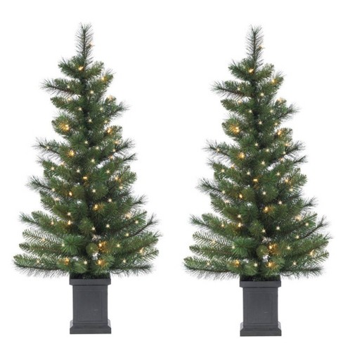 Potted Christmas Tree.3 5ft 2pc Sterling Tree Company Potted Sycamore Spruce With 50 Clear Lights Artificial Christmas Tree