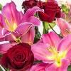 Colour Republic Red Garden Rose Bouquet - image 3 of 4