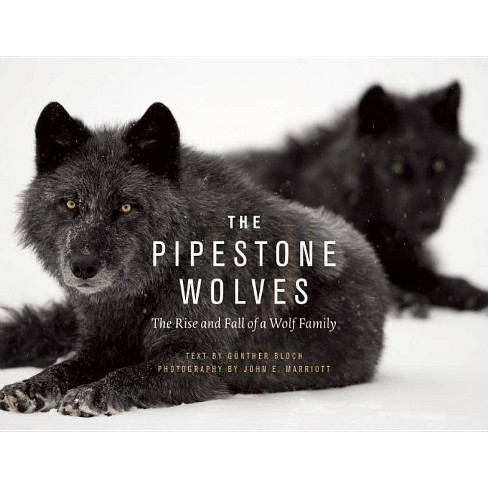 The Pipestone Wolves - by  Gunther Bloch (Hardcover) - image 1 of 1