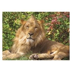 Springbok Lion King Puzzle 100pc