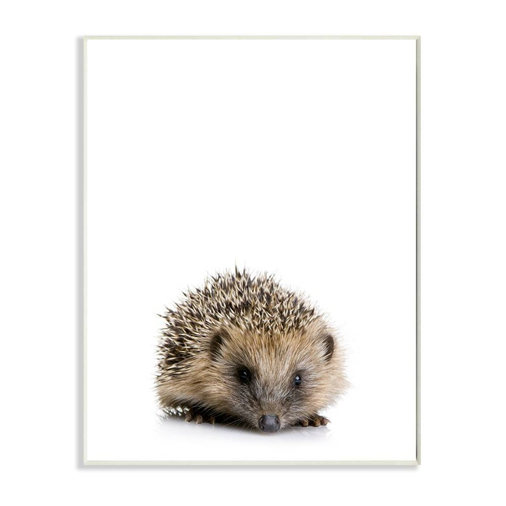 "Image of ""10""""x0.5""""x15"""" Baby Hedgehog Studio Photo Wall Plaque Art - Stupell Industries"""