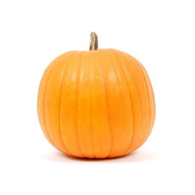 Jack O'Lantern Carving Pumpkin - each