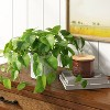 """14"""" x 28"""" Artificial Pothos Plant in Pot - Threshold™ - image 2 of 4"""