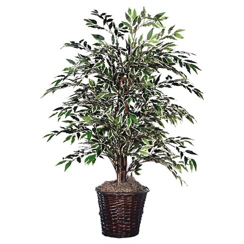 "Variegated Smilax Bush with a Dark Brown Rattan Container (48"") - image 1 of 1"