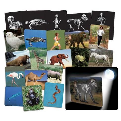 Roylco What's Inside Animals? - image 1 of 1