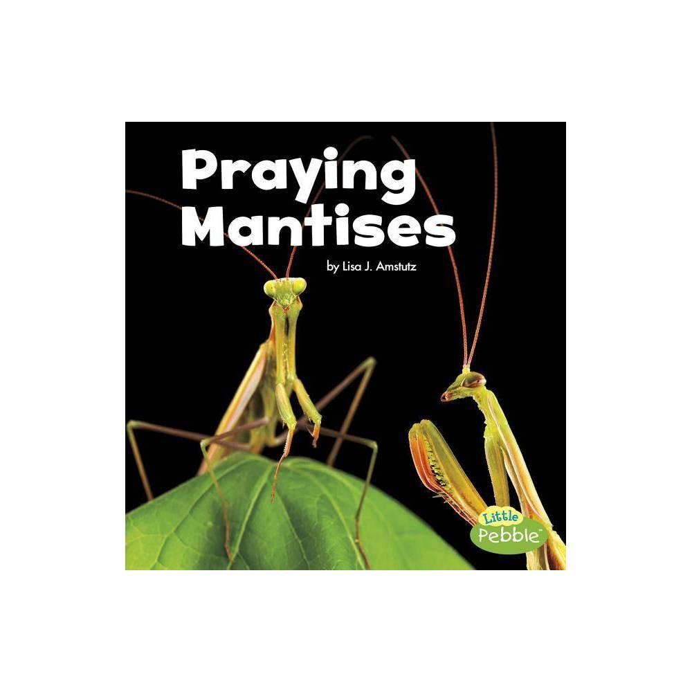 Praying Mantises Little Critters By Lisa J Amstutz Paperback