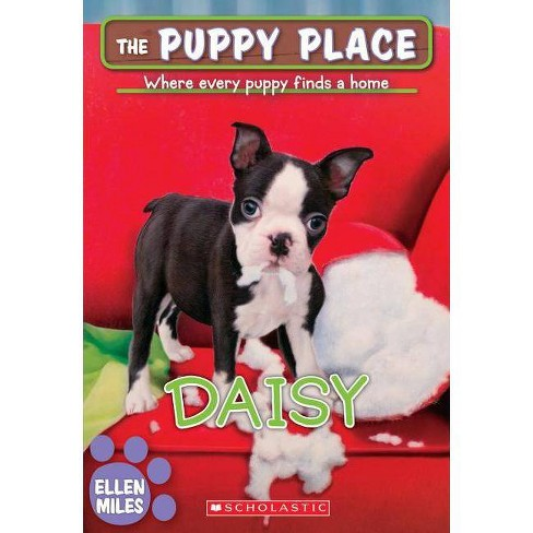 Daisy (the Puppy Place #38) - by  Ellen Miles (Paperback) - image 1 of 1