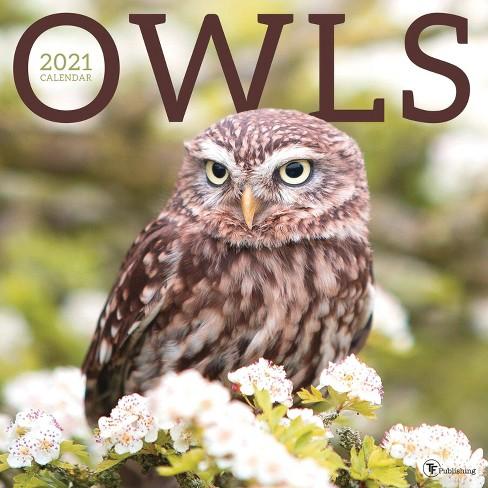 Owl Calendar 2021 2021 Wall Calendar Owls   The Time Factory : Target