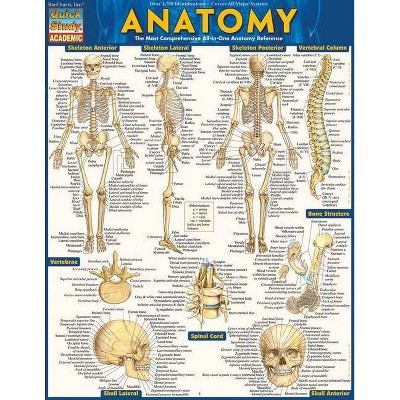 Anatomy - Reference Guide (8.5 X 11) - by  Vincent Perez (Poster)