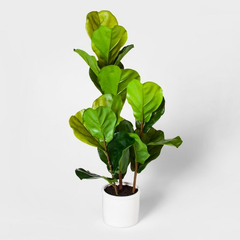 "33"" x 16"" Fiddle Leaf Fig Plant In Pot Green/White - Threshold™ - image 1 of 2"