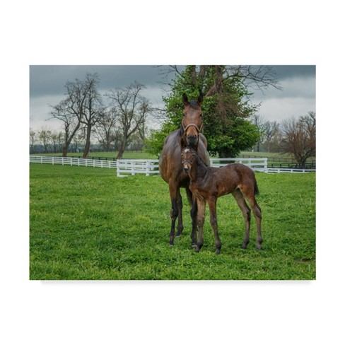 "Trademark Fine Art 47"" x 35"" Galloimages Online 'Mare and Foal 2' Canvas Art - image 1 of 3"