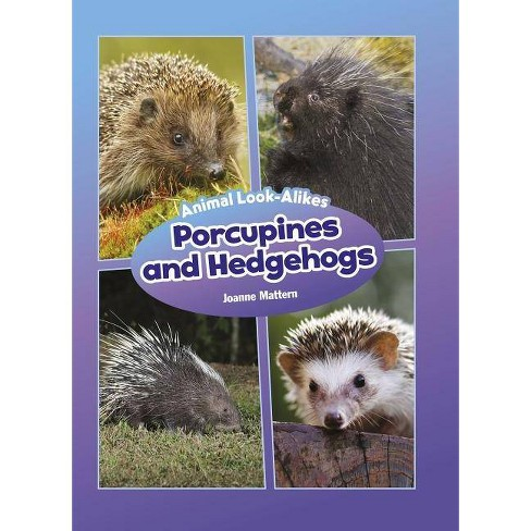 Porcupines and Hedgehogs - (Core Content Science -- Animal Look-Alikes) by  Joanne Mattern (Hardcover) - image 1 of 1