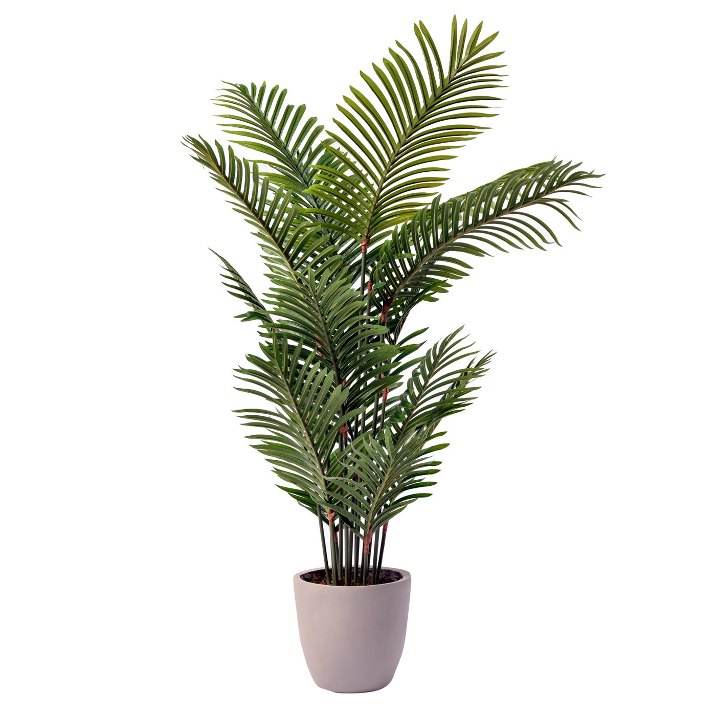 """54"""" Potted Palm Plant - Lloyd & Hannah - image 1 of 1"""