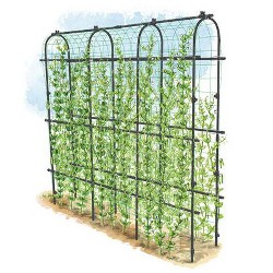 Titan Pea Tunnel, Extra Strong Lightweight Metal Trellis for Vegetables and Flowers - Gardener's Supply Company