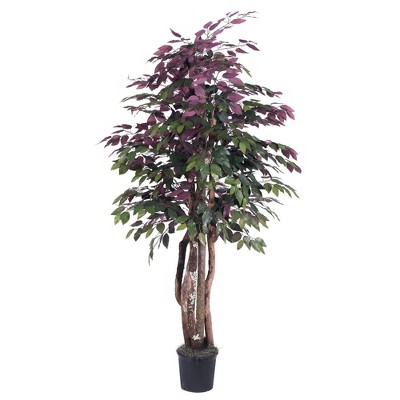 Capensia Executive Tree with Dragonwood Trunks (6ft)