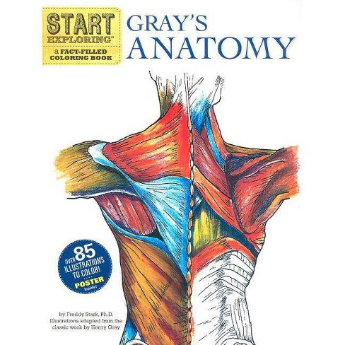 Gray's Anatomy - (Start Exploring (Coloring Books)) by  Freddy Stark (Mixed media product) - image 1 of 1