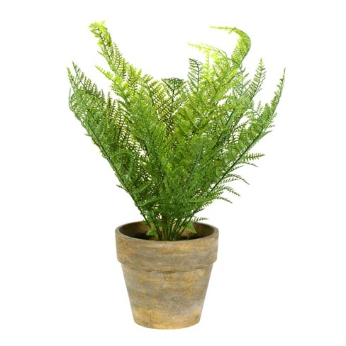 "Vickerman 19"" Artificial Green Lace Fern Bush in Container. - image 1 of 2"