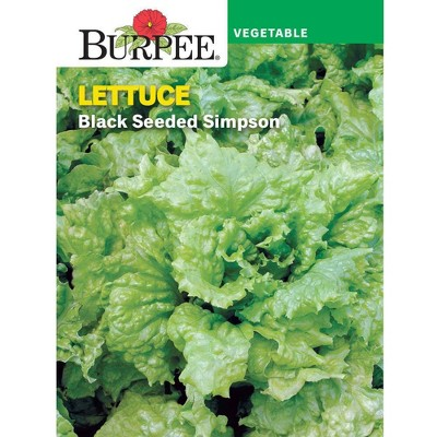 Burpee Lettuce Leaf Black Seeded Simpson