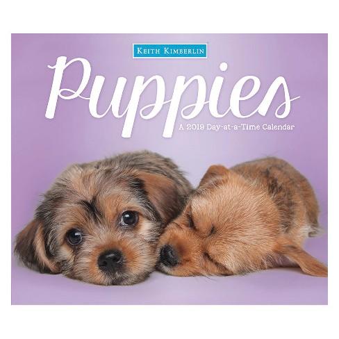 2019 Tented Desktop Calendar Puppies - Trends International