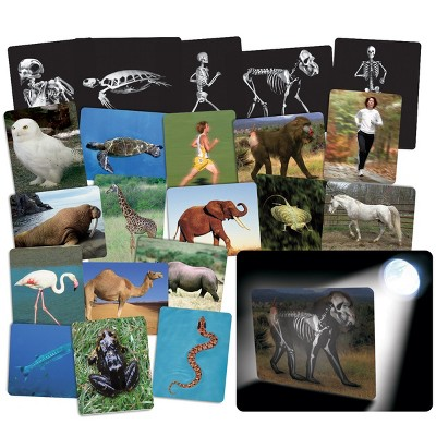 Roylco What's Inside Animals?