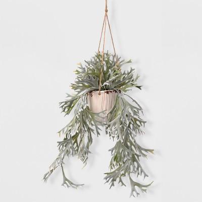 27  Staghorn in Hanging Pot - Lloyd & Hannah
