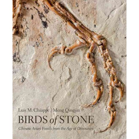 Birds of Stone : Chinese Avian Fossils from the Age of Dinosaurs (Hardcover) (Luis M. Chiappe) - image 1 of 1