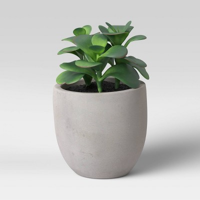 Colorful Succulent in Pot Gray/Green - Project 62™