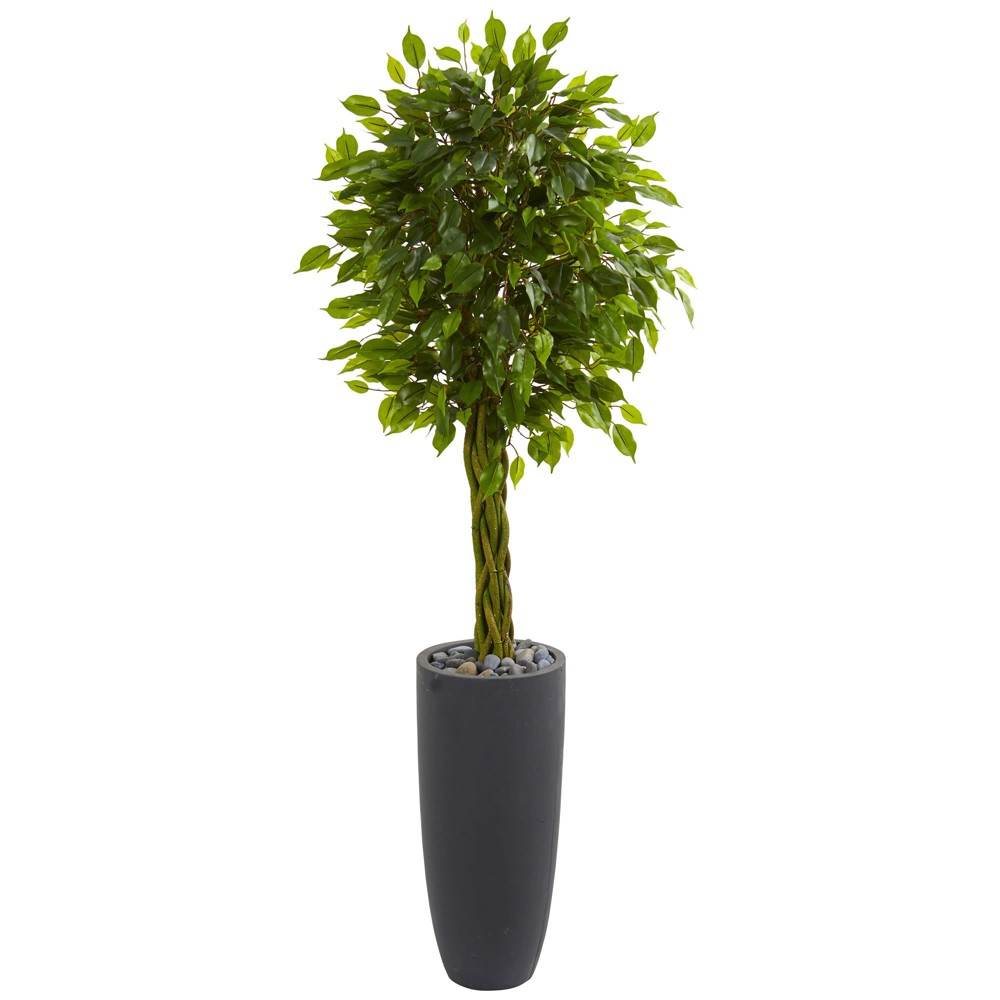 5.5ft Braided Ficus Artificial Tree In Gray Cylinder Planter - Nearly Natural, Green