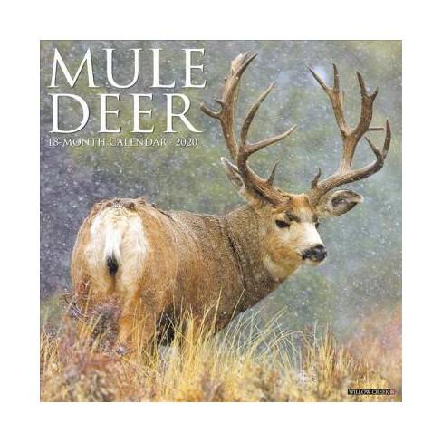 Deer Calendar 2020 Mule Deer 2020 Calendar   (Paperback) : Target