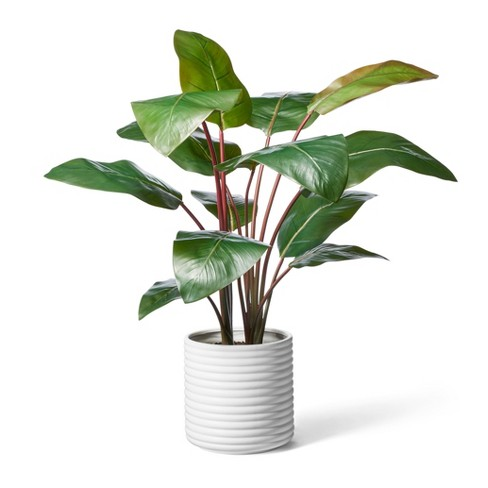 """39"""" x 24"""" Artificial Rojo Congo Plant in Ribbed Ceramic Pot White - Hilton Carter for Target - image 1 of 3"""