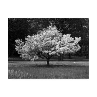 "14"" x 19"" Cherry Blossom Michigan by Monte Nagler - Trademark Fine Art"
