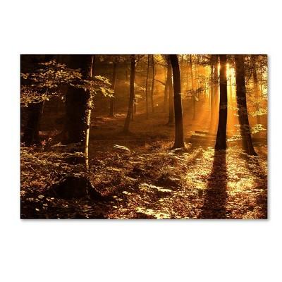 "30"" x 47"" Morning Light by Philippe Sainte Laudy - Trademark Fine Art"