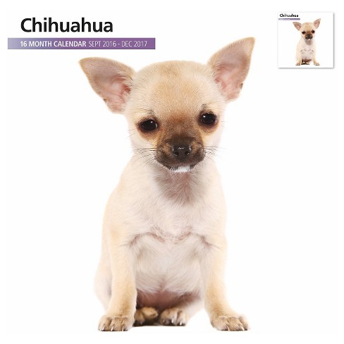 Chihuahua 2017 16 Month Calendar - image 1 of 3