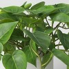 """14"""" x 28"""" Artificial Pothos Plant in Pot - Threshold™ - image 3 of 4"""