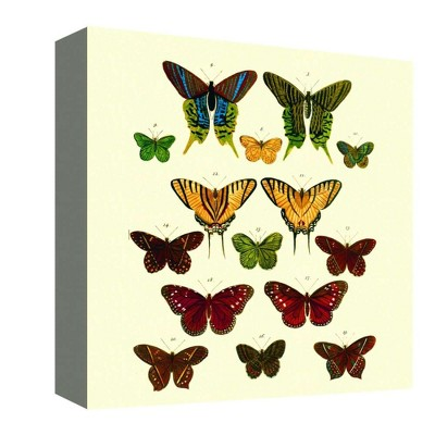"16"" x 16"" Butterfly Colors II Decorative Wall Art - PTM Images"