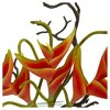 Heliconia in Glass Vase Orange - Nearly Natural - image 3 of 3