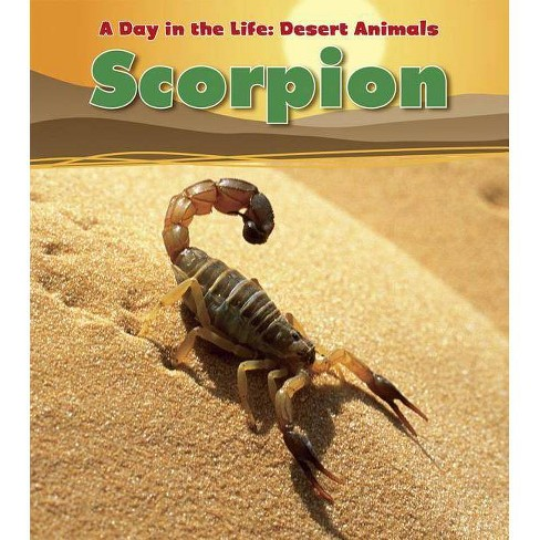 Scorpion - (Day in the Life: Desert Animals (Paperback)) by Anita Ganeri  (Paperback)