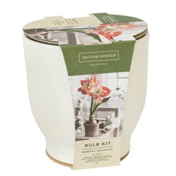 Red/White Amaryllis Grow Kit - Cream - Smith & Hawken™