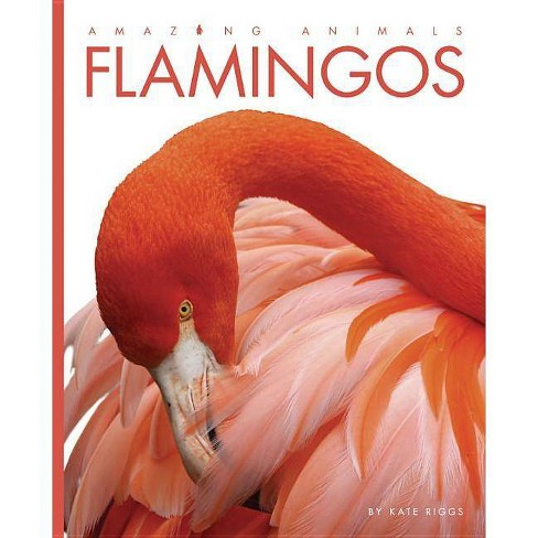 Amazing Animals: Flamingos - by  Kate Riggs (Paperback) - image 1 of 1
