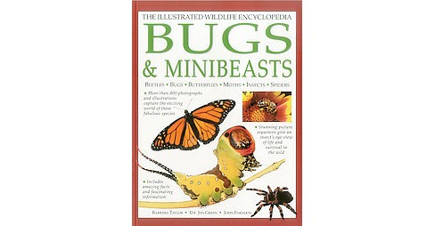 Illustrated Wildlife Encyclopedia Bugs & Minibeasts (Paperback) (Barbara Taylor & Dr. Jen Green & John - image 1 of 1