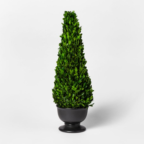 Preserved Boxwood conetree  - Smith & Hawken™ - image 1 of 1