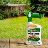32 fl oz Ready-to-Spray Weed & Feed - Spectracide - image 4 of 4