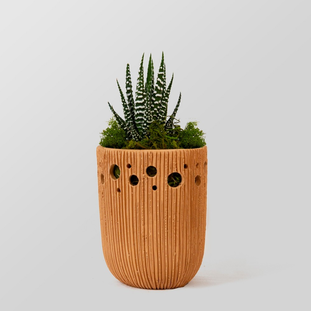 Image of Dhyana Plant Terracotta Pot