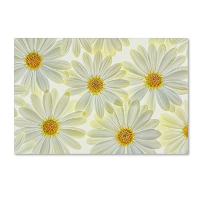 Daisy Flowers' by Cora Niele Ready to Hang Canvas Wall Art