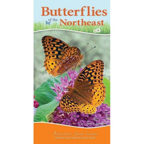 Butterflies of the Northeast - (Adventure Quick Guides) by  Jaret C Daniels (Spiral_bound) - image 1 of 1