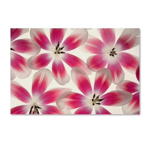 Trademark Global Cora Niele 'Ruby Red and White Tulips' Unframed Wall Canvas Art - image 1 of 3